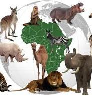 Заповедники Африки реферат fizika ili himija ru Заповедники Африки реферат